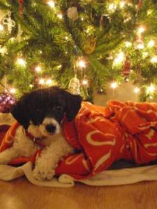 This was our Christmas card a few years ago. Cami loves to lounge under the tree!