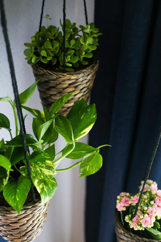 Easy Indoor Hanging Plants