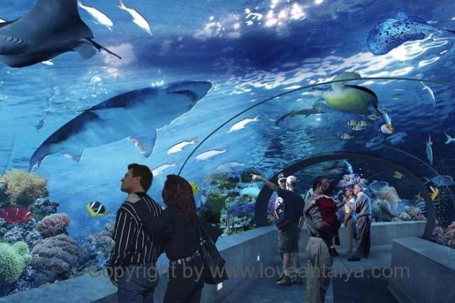 Antalya Aquarium | Туннель Аквариум