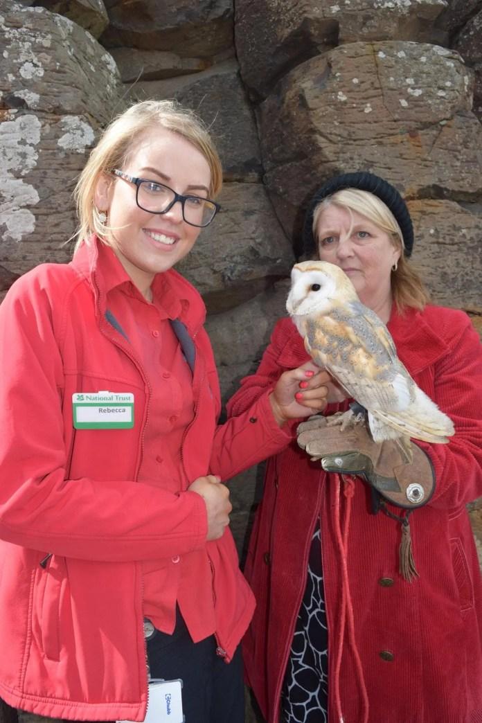Owl at Giant's Causeway credit Karenann Toney_2