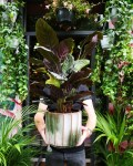 How NOT to kill your plants! – from Memento Belfast