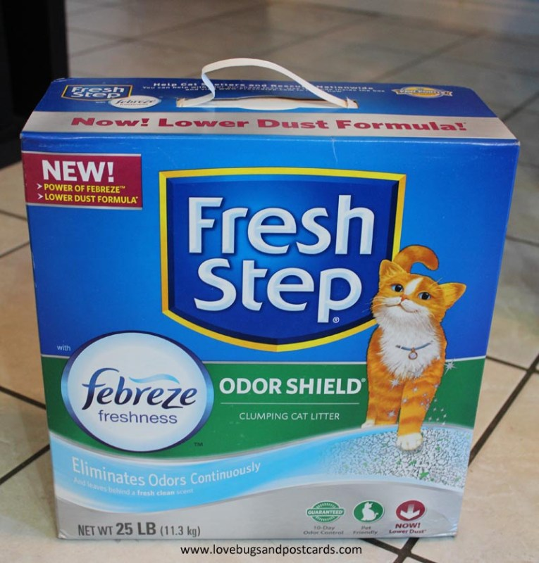 How to eliminate the litter box smell in your house