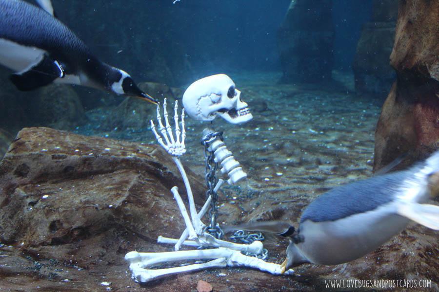 aquariumpenguinesskeleton