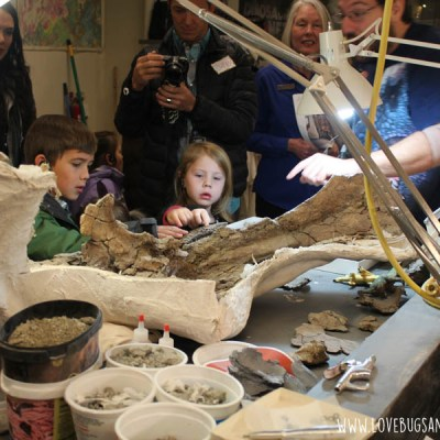 A mini tour of the Natural History Museum of Utah #explorenhmu