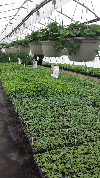 Hillside greenhouses (3)