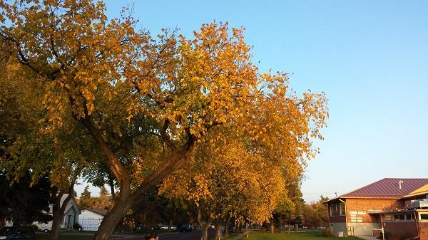Осень в Манитобе (2)