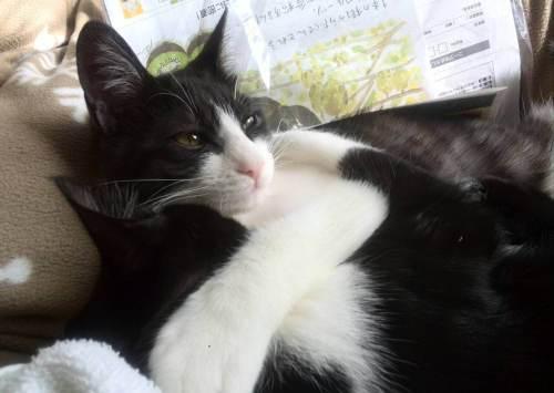 かわいい仔猫達が抱き合っています