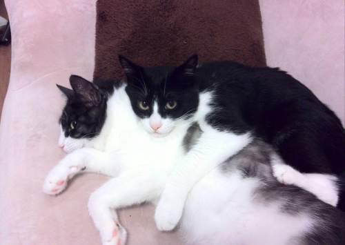 2匹の猫がモフモフ