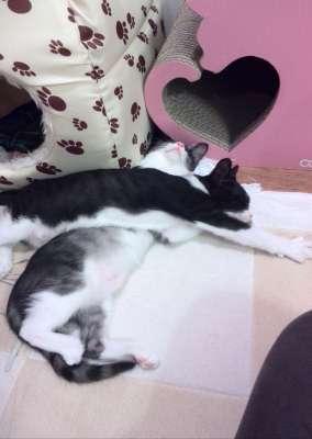 ひどい格好で寝ているかわいい猫達