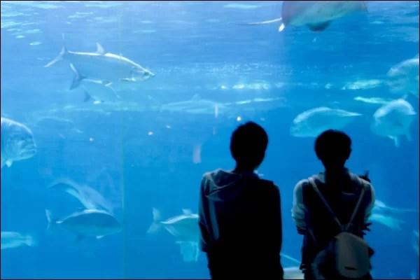 付き合う前デートにおすすめの場所 水族館