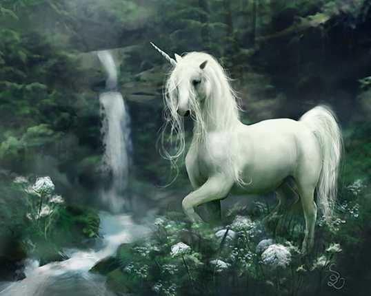 unicorn-httpwww-reddit-comrunicorns-4851558