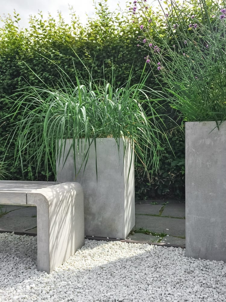 Contemporary plants
