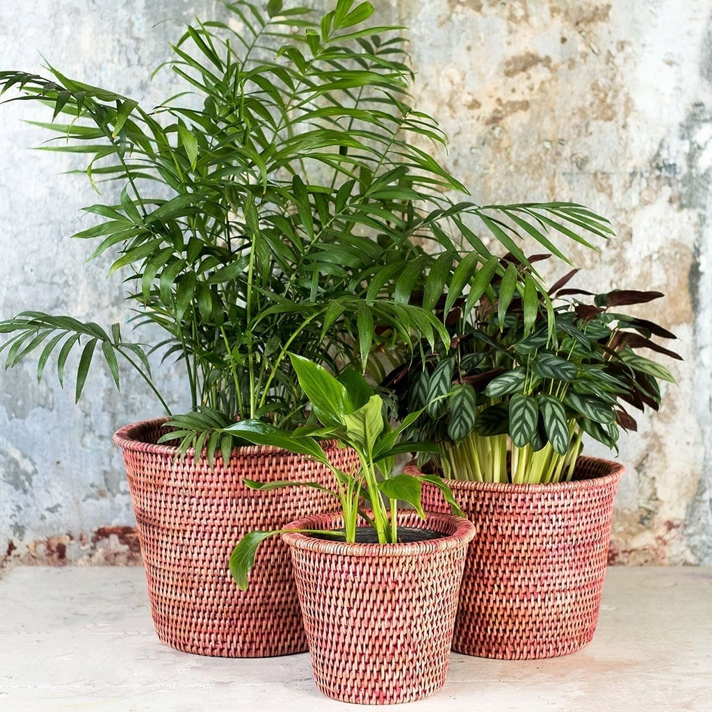 rattan planters and plants