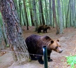 22 Парк за танцуващи мечки - Белица