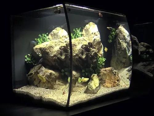 Betta Aquarium Kits Fish