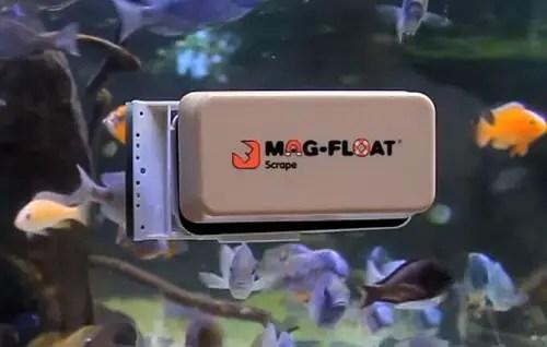 Image result for algae magnet