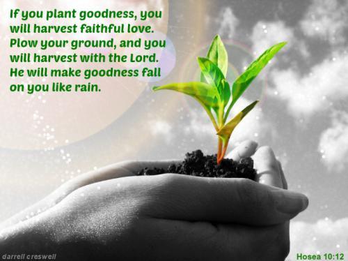 nu17 plant goodness harvest