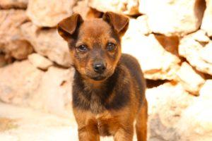 puppy-1675170_960_720