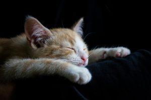 cat-1056661_960_720