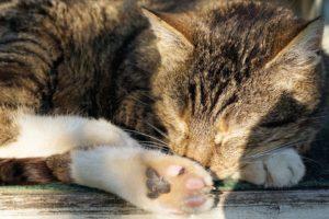 cat-1721266_960_720