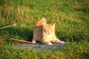 cat-1074784_960_720