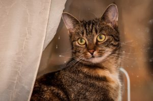 cat-274443_960_720