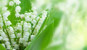 「スズラン 花」の画像検索結果
