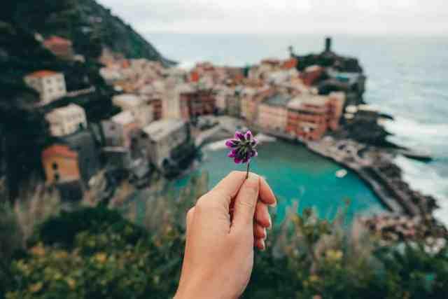 Flower overlooking Vernazza in Cinque Terre