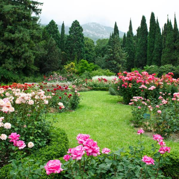 rose garden Plant and Garden Ideas for Your Home - Love Home Designs