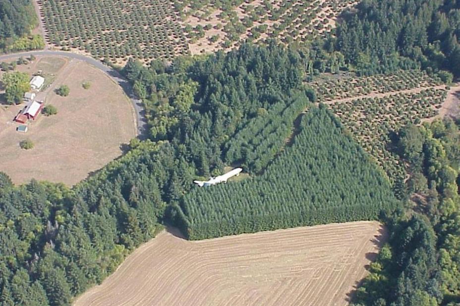 Где вы можете встретить огромный авиалайнер? Конечно по среди леса!