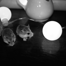 new members of our family: Hamsters Honey & Bunchie