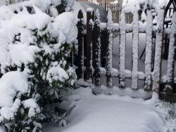 Feb-9-snow-4