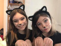 carnival-cats