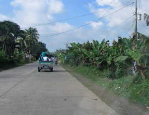 Banana plantation (2)