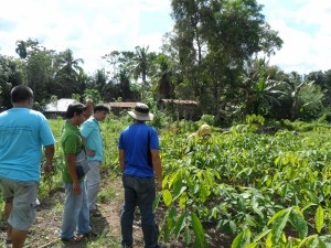Tree farm (12) rubber trees