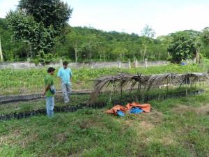 Tree farm (18)