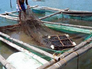 Naungan Fishing community (34)