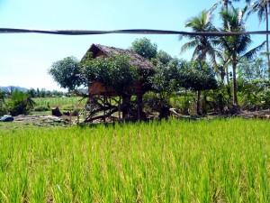 Sabang Bao community (13)