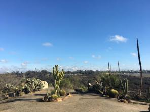 View from the cactus garden