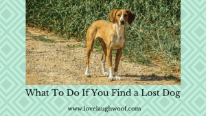 What To Do If You Find a Lost Dog