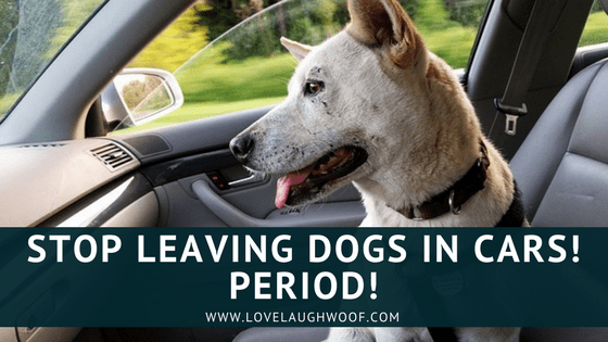 Stop Leaving Dogs In Cars! Period!