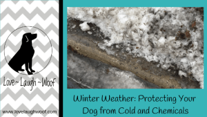 Winter Weather: Protecting Your Dog from Cold and Chemicals
