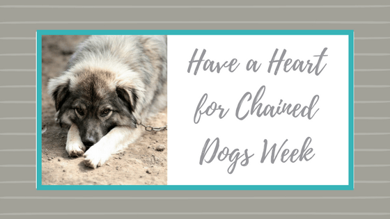 Have a Heart for Chained Dogs Week