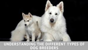 Understanding the Different Types of Dog Breeders