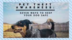 Pet Theft Awareness How to Keep Your Dog Safe