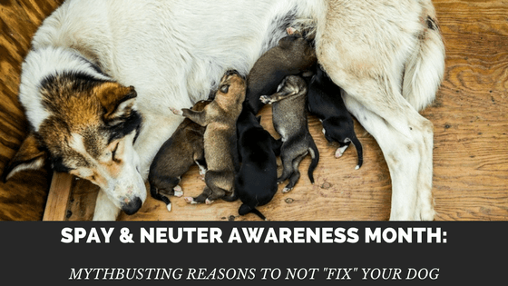 """Spay/Neuter Awareness Month: Reasons to Not """"Fix"""" Your Dog"""