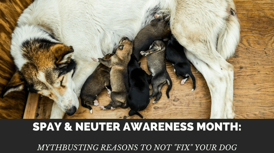 "Spay/Neuter Awareness Month: Reasons to Not ""Fix"" Your Dog"
