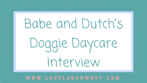 Babe and Dutch's Doggie Daycare Interview