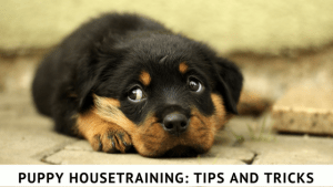 Puppy House Training: Best Practices & Tips
