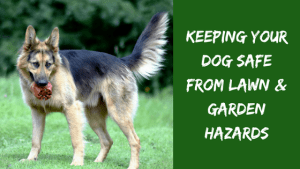 Keeping Your Dog Safe From Lawn & Garden Hazards
